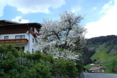 Apfelblüte mit Haus