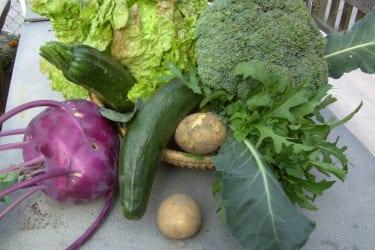 gesundes , knackiges Gemüse aus dem Garten