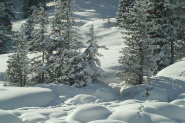 winterlicher Märchenwald