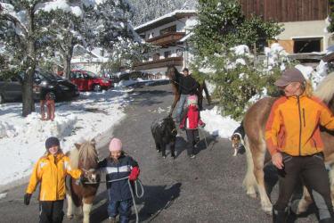 Viel Leben bringen unsere Pferde auf den Kassnhof