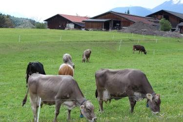 unsere Milchlieferanten