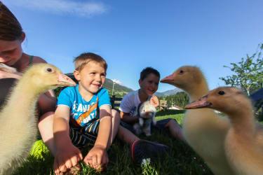 Kinder mit Gänsen