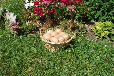 Eier von unserern glücklichen Hühnern