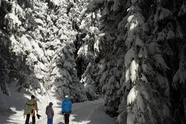 Rodeln winter