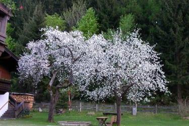 Sicht vom ZI  Edelweiß Apfelblüte