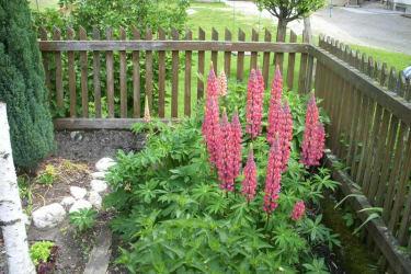 Blumen im Hausgarten