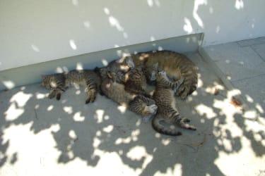 Katzen in Mittagsruhe
