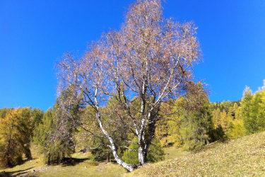 Goldener Herbst in den Bergen!