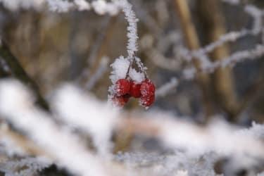 Früchte im Winter