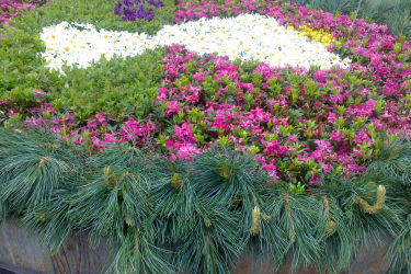 Blumenschmuck (Brunnen)