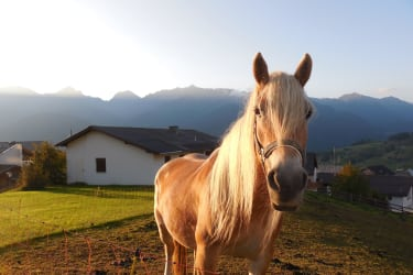 Pferd La Cruze