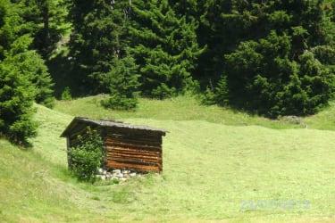 Bergwiesen.