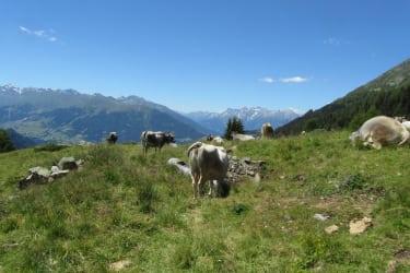 Angekommen auf der Falkaunsalm, wo auch unsere Kühe Ihren Sommerurlaub verbringen!