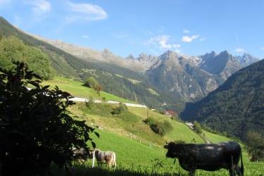 Ab jetzt sind unsere Kühe wieder auf der Heimweide!