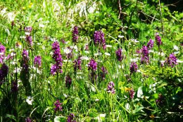 saftige Blumenwiese, schauen, riechen, einatmen - einfach prächtig...