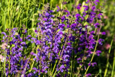 Kräftige Farben, heilende Wirkung, kann zu Tee und Säften verarbeitet werden, Biohof-Inntalblick
