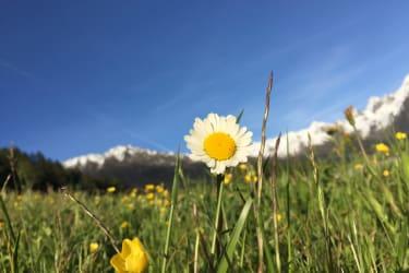 Blumenwiese im Frühsommer