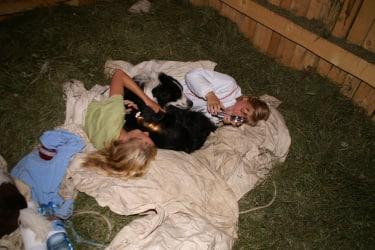Heuübernachtung mit Hund