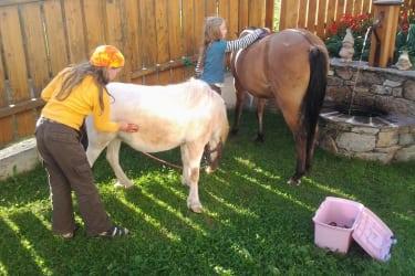 Kinder beim Pony striegeln