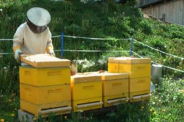 Luis bei den Bienen