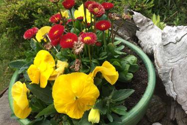 Frühlingsgruß aus Tirol