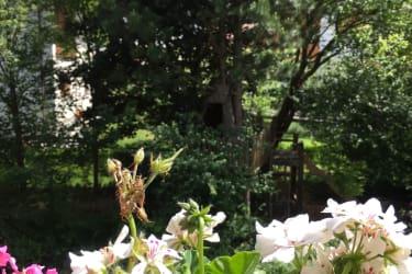 Blick zum Baumhaus