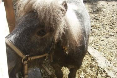 Pferd Johnny