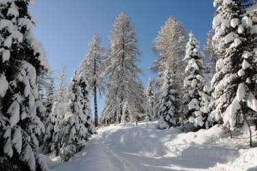 durchwandern verträumter Winterlandschaften