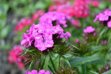 Jede Blume wächst und gedeiht im eigenen Garten ...