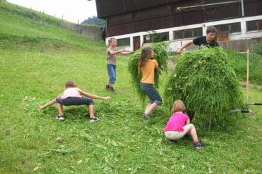 Gras für die Kühe