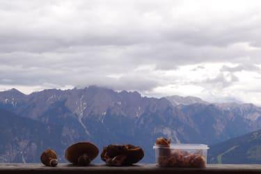 Schwammerln direkt hinter der Hütte gefunden