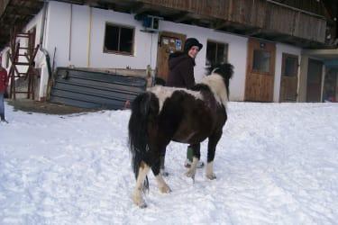 Auch dem Pony gefällt es im Schnee