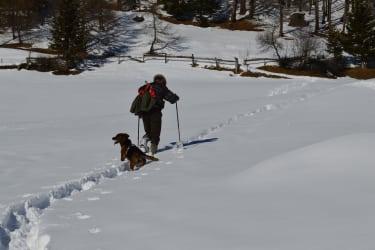 Schneeschuhwandern Bichler Wald