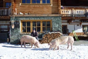 Schweine im winterlichen Garten