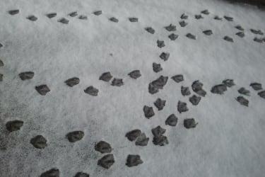 Entenausflug im Schnee