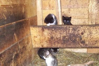 Kätzchen im Stall