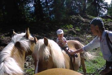 Sommerurlaub für unsere Haflinger