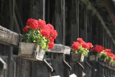 Blumenschmuck bei Punbrugge