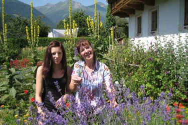 Lavendelernte im Bauerngartl