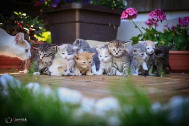 Unsere süßen Kätzchen