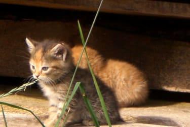 im Frühjahr sind die Katzenbabys natürlich ein Highlight