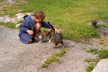 eine ganze Katzenfamilie