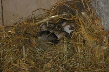 Kleine Hasen am Breierhof