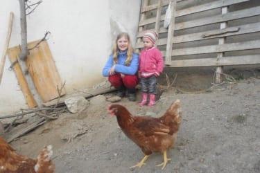 Kinder beobachten die Hühner