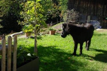 Pony Cindy
