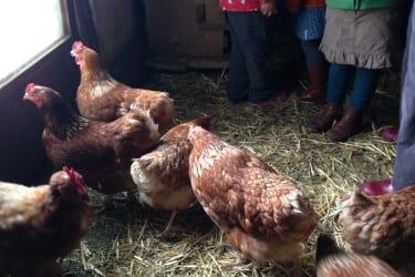 die Hühner von der Familie Zotz.