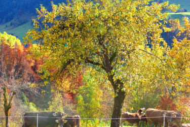 Herbst am Sallerhof
