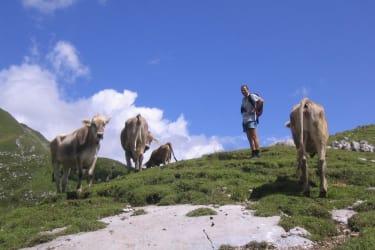 Besuch unserer Tiere auf der Alpe