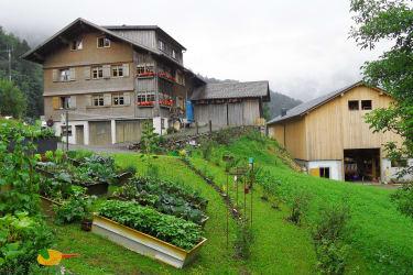 Sommer am Bauernhof Farnach in Andelsbuch-Bersbuch