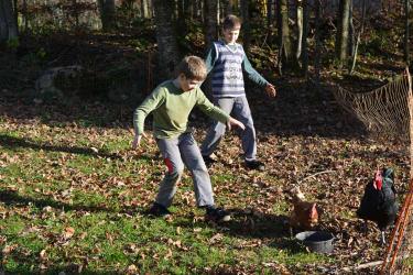 Freilauf unserer glücklichen Hühner